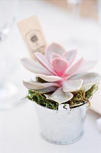 Kwiaty i kompozycje kwiatowe ogrodowe na for Acheter des plantes en ligne