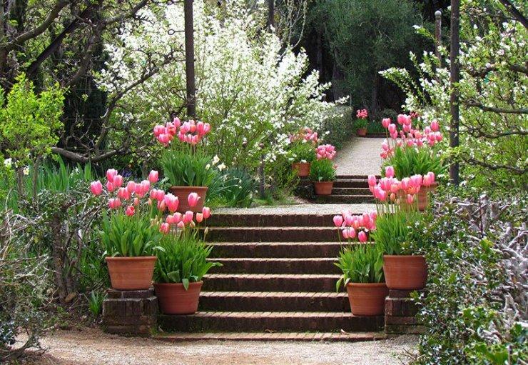Tulipany W Doniczkach Wiosenne Kwiaty Ogrodowe Inspir Na Stylowi Pl