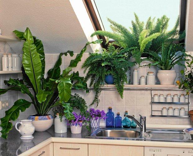 Rośliny Doniczkowe W Kuchni W Ciemnej Kuchni Sprawdzą Na
