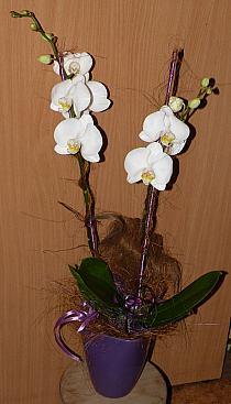 60b605ac1fa023 Dodaj do swojej kolekcji Edytuj Lubię to Ustaw jako okładkę kolekcji  Komentuj. Otwórz. 3. Parviflora - Kwiaty doniczkowe - bukiety ślubne ...