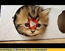 Kot Vs Ogórek Obrazki Jejapl Na Stylowipl