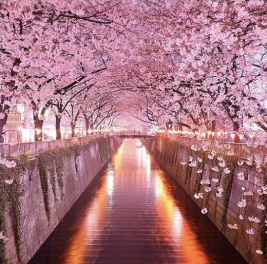 Beautiful Places In Japan Tumblr: Kwitnące Wiśnie, Japonia Na Stylowi.pl
